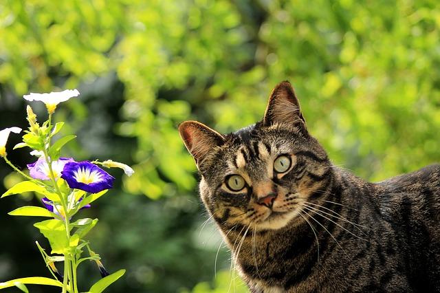 cat-1706757_640